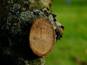 Baumschnittkurs junger Obstbäume @ Hofgut Oberfeld