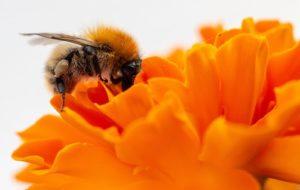 """Treff """"Bienenfreundliches Darmstadt"""" @ Privatwohnung"""