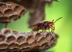 Workshop - Keine Angst vor Wespen und Hornissen @ Medienbäckerei