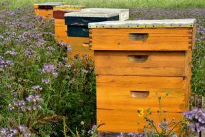 """Vortrag """"Das Leben der Bienen in unserer Umwelt"""" @ Centralstation"""